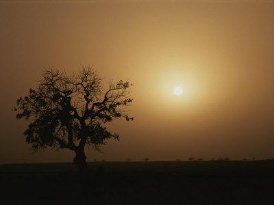 A Baobab Tree (Adansonia Digitata) Silhouetted by the African Sunset