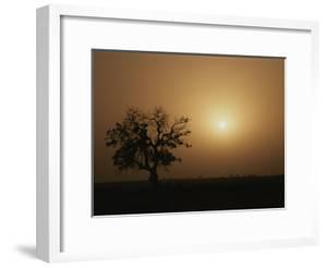 A Baobab Tree (Adansonia Digitata) Silhouetted by the African Sunset by Bobby Model