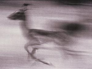 An Antelope Speeds Past the Camera by Bobby Model