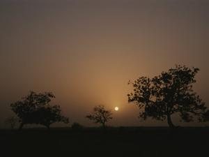 Baobab Trees (Adansonia Digitata) Silhouetted by the African Sunset by Bobby Model