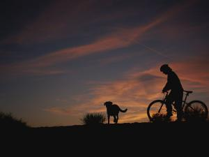 Bicyclist and Pet Silhouetted against a Sunset by Bobby Model