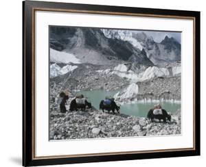 Yak Herders Cross a High Pass Near Mount Everest, Nepal by Bobby Model