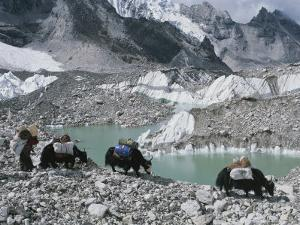 Yak Herders Cross a High Pass Near Mount Everest, Nepal by Bobby Model