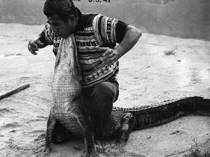 Bobby Tiger Wrestles an Alligator at Tiger's Indian Village, 1973