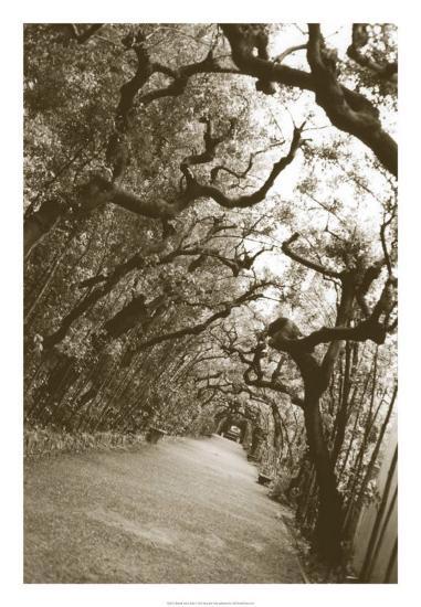 Boboli Arbor, Italy-Meg Mccomb-Giclee Print