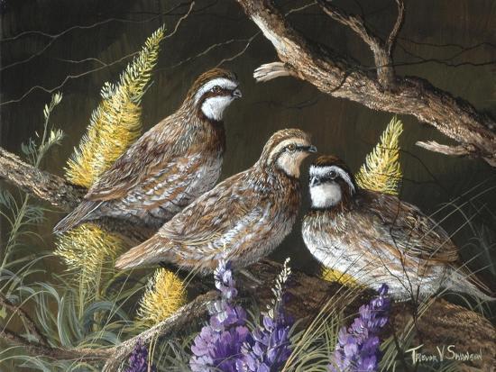 Bobwhite Trio 1-Trevor V. Swanson-Giclee Print