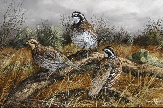 Bobwhite Trio 2-Trevor V. Swanson-Giclee Print