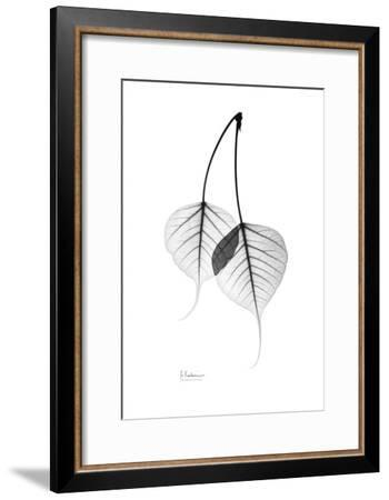 Bodhi Tree Leaves in Black and White-Albert Koetsier-Framed Art Print