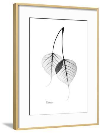Bodhi Tree Leaves in Black and White-Albert Koetsier-Framed Art Print