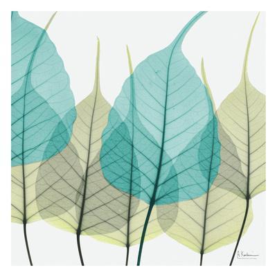 https://imgc.artprintimages.com/img/print/bodhi-tree_u-l-f5ltqw0.jpg?p=0