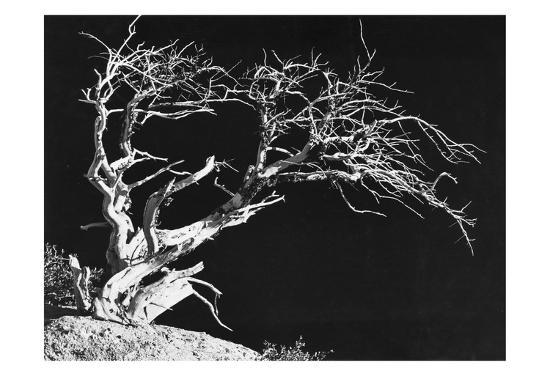 Bodi Tree-Albert Koetsier-Art Print