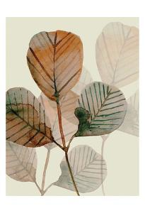 Brown Leaves 2 by Boho Hue Studio