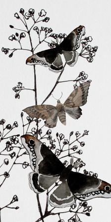 Dark Butterflys 2