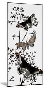 Dark Butterflys 2 by Boho Hue Studio