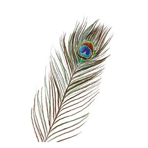 Peacock Single 1 by Boho Hue Studio