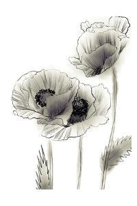 Sketched Poppies 2 by Boho Hue Studio