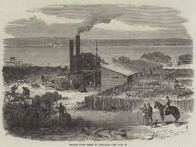 Boiling Down Sheep in Australia--Giclee Print
