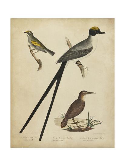 Bonapart Birds III-Charles L^ Bonapart-Art Print