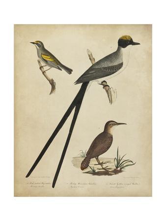 https://imgc.artprintimages.com/img/print/bonapart-birds-iii_u-l-q1bfvdf0.jpg?p=0