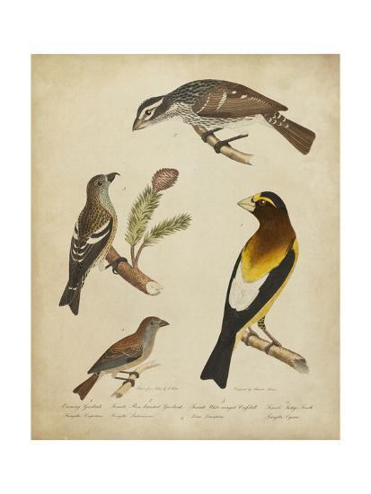 Bonapart Birds IV-Charles L^ Bonapart-Art Print