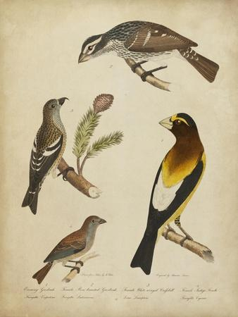 https://imgc.artprintimages.com/img/print/bonapart-birds-iv_u-l-q1bfvak0.jpg?p=0