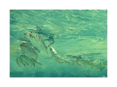Bonefish Bibblin' in De Drougey Water, 1988-Stanley Meltzoff-Giclee Print