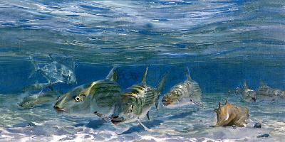 Bonefish Schooling with Permit Fish on the Flats-Mike Rivken-Photographic Print