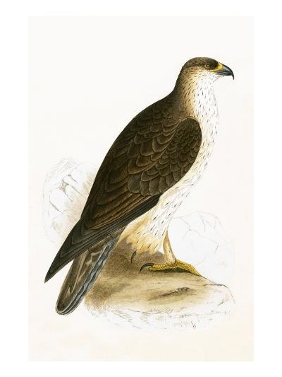 Bonelli's Eagle,  from 'A History of the Birds of Europe Not Observed in the British Isles'-English-Giclee Print