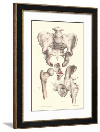Bones of the Pelvis, Lower Spine, and Upper Leg-Found Image Press-Framed Giclee Print