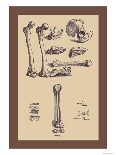 Bones with Tools-Andreas Vesalius-Art Print
