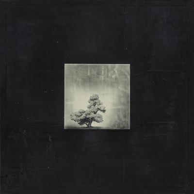 Bonsai Cave Tree-OM-Premium Giclee Print