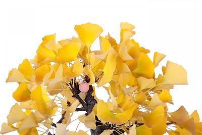 https://imgc.artprintimages.com/img/print/bonsai-ginko-biloba_u-l-pzqtiq0.jpg?p=0