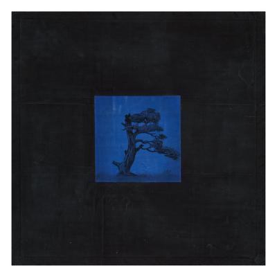 Bonsai Immortality Tree-OM-Premium Giclee Print