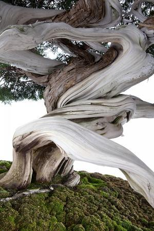 https://imgc.artprintimages.com/img/print/bonsai-juniper_u-l-pzqq9z0.jpg?p=0