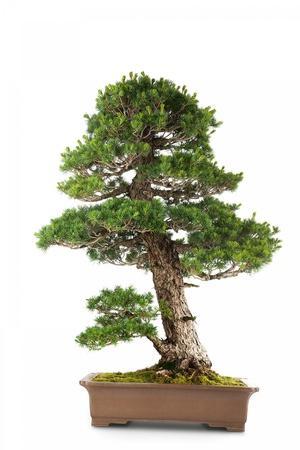 https://imgc.artprintimages.com/img/print/bonsai_u-l-pzqqjl0.jpg?p=0