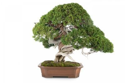 https://imgc.artprintimages.com/img/print/bonsai_u-l-pzqqkn0.jpg?p=0