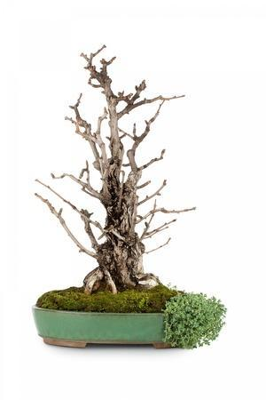 https://imgc.artprintimages.com/img/print/bonsai_u-l-pzqtfy0.jpg?p=0