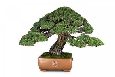 https://imgc.artprintimages.com/img/print/bonsai_u-l-pzqtzc0.jpg?p=0
