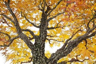 https://imgc.artprintimages.com/img/print/bonsai_u-l-pzquez0.jpg?p=0