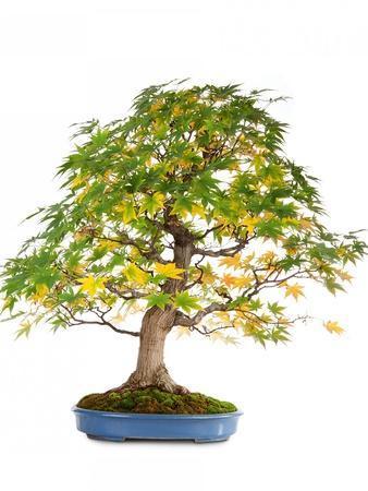 https://imgc.artprintimages.com/img/print/bonsai_u-l-pzquyt0.jpg?p=0