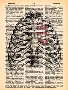 Sternum & Heart by Book Dictionary Art