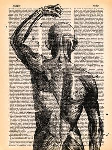 Superficial Muscles by Book Dictionary Art
