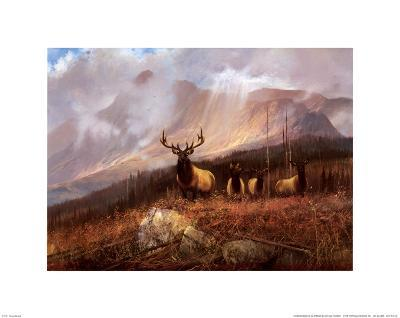 Bookcliffs Elk II-Michael Coleman-Art Print