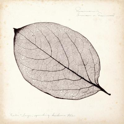 Persimmon Leaf