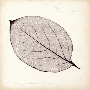 Persimmon Leaf by Booker Morey
