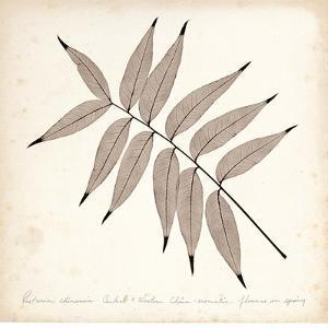 Pistacia Leaf by Booker Morey