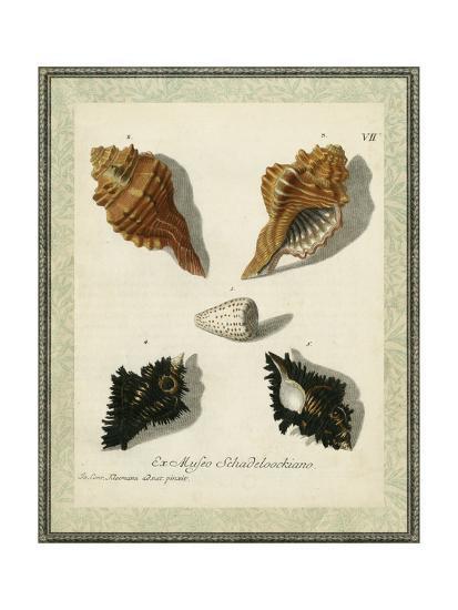 Bookplate Shells I--Art Print