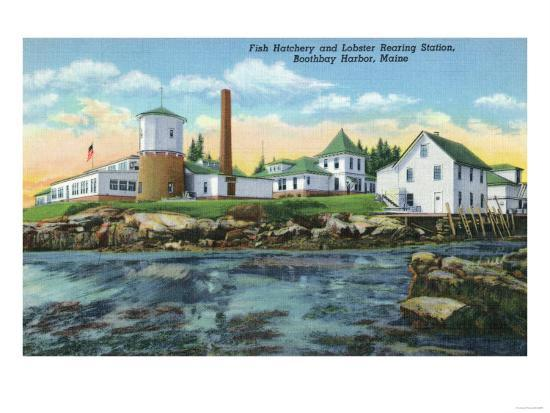 Boothbay Harbor, ME - View of a Fish Hatchery, Lobster Rearing Station-Lantern Press-Art Print