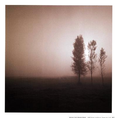 Bordeaux Trees-Richard D'Amore-Art Print