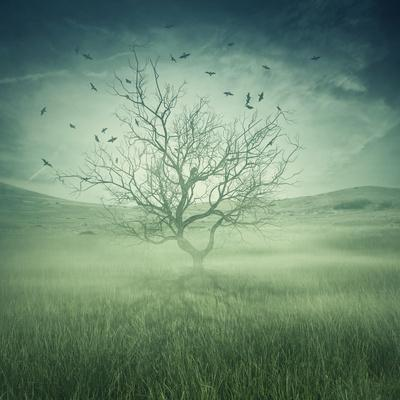 Lonely, Bare Tree in Middle of Foggy Field with Birds Flying Around
